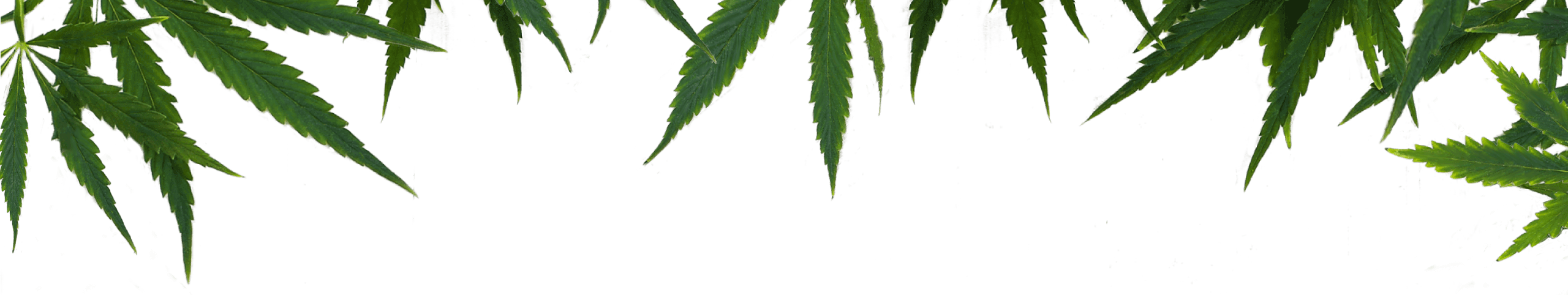 hemp leaves divider